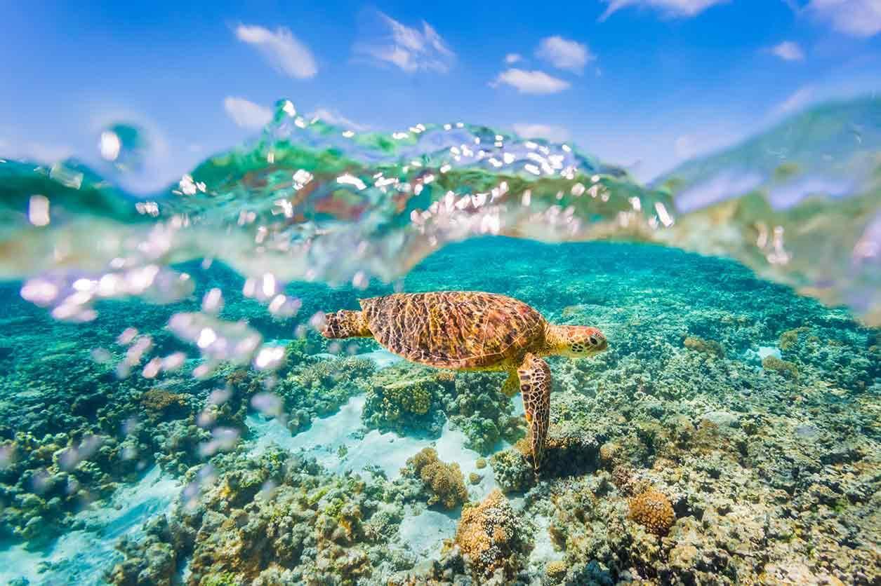 Hamilton Island Snorkelling Getaway